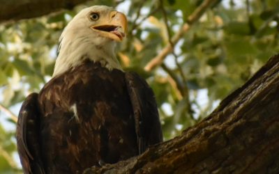 The Eagles at Eagles Landing
